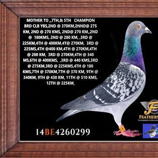 BELGE 14 4260299 CH HEN.