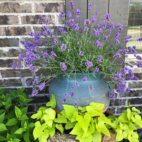 From Stink Bug to Lavender: Conforming to the Image of Christ