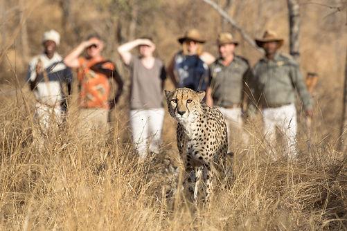 cheetah-3056387_1920.jpg
