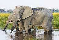 Tour South Africa - Elephant.jpg