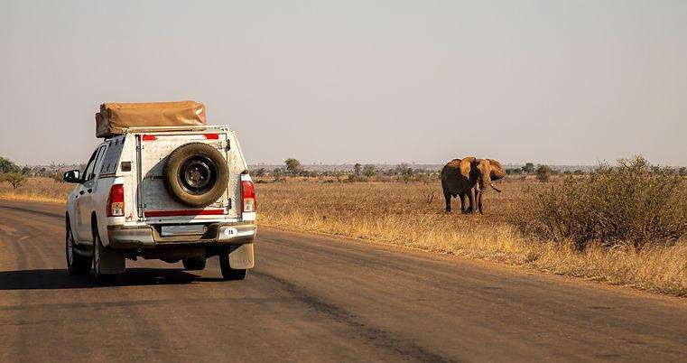 safari-4700423_1920_edited.jpg