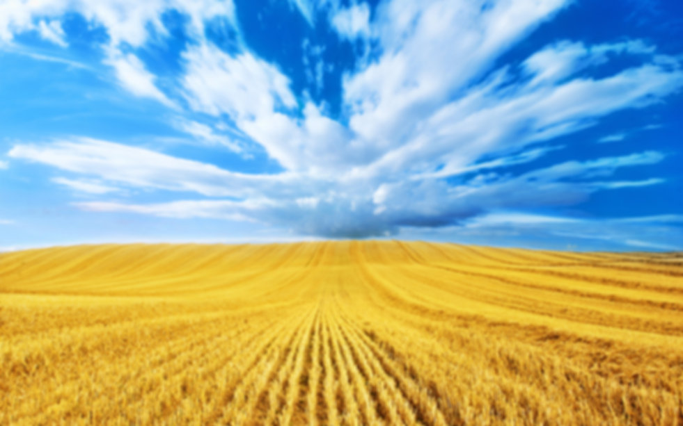golden-harvest-blue-clouds-gold-wheat-fi