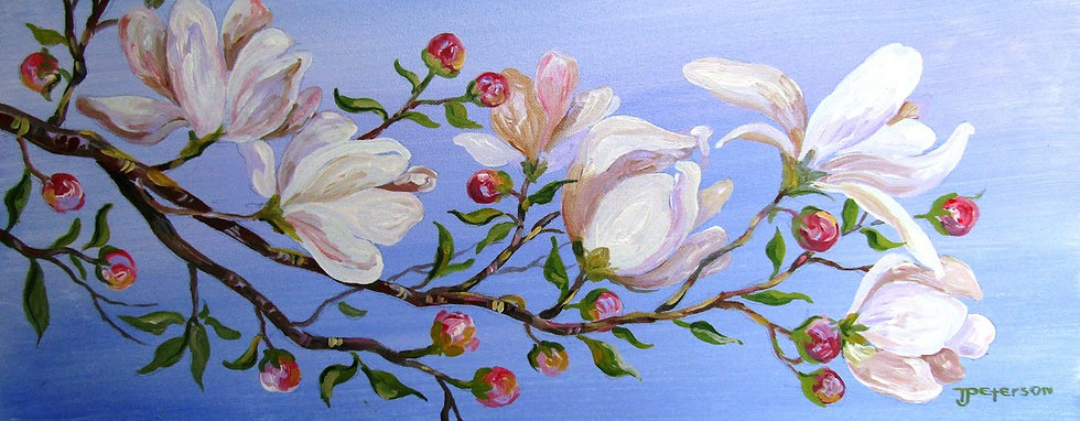 new original 4-20 Saucer Magnolia.jpg