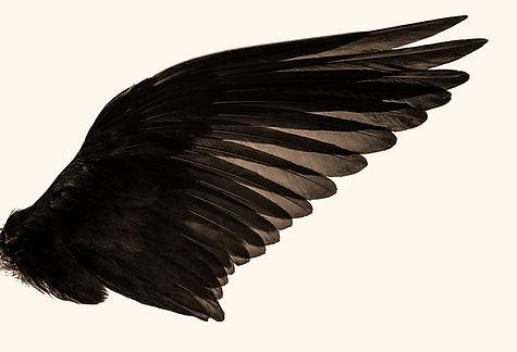 black%2520angel%2520wings_edited_edited.jpg