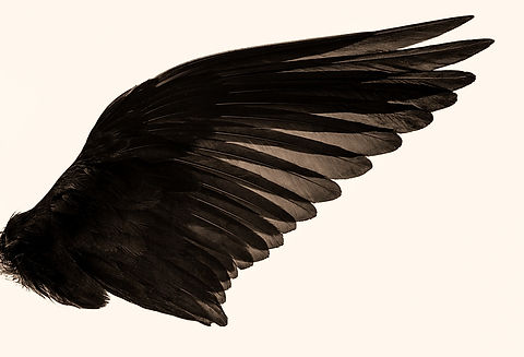 black%2520angel%2520wings_edited_edited.jpg