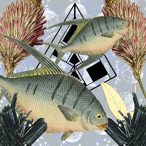 Fish - Sold as individual coaster.