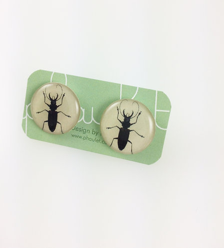 Insects Studs