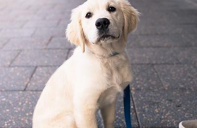 Puppy/ dog photography. Sevs Pics. Perth Photographer