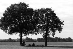 Zwei Bäume und ein Feld 18x24cm - Deutschland, 2020