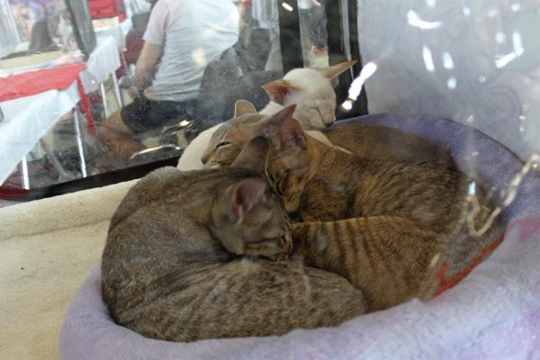 Коты.png