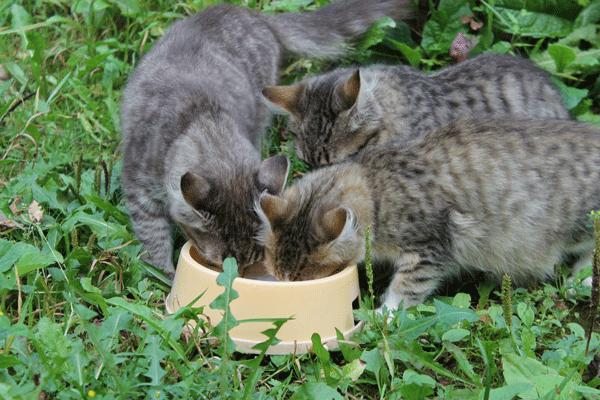 Котята-в-добрые-руки.png