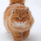 Передержка кошек и собак Москва и Подмосковье