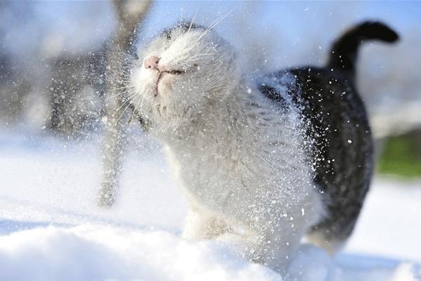 Кошка-в-снегу.png