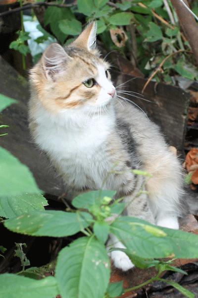 кошка.png