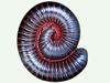 millipede_thumb.png