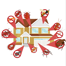 insectes rongeurs maison.PNG