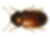 stegobie_des_pharmacies_thumb.png