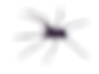 araignée dolomède