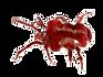 araignée Tétranyque du trèfle