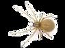 araignée des maisons