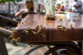 insectes au restaurant.jpg