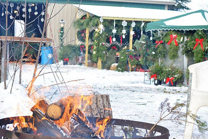 Welcoming campfire. Wreaths, garland, swags, spruce tops, planters