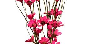 41101 6 Stem Pink Poppy