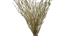 41075 250gm Palm Magdalena Bleached Bunch 32-34 inch