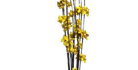 41021 12 Stem Ting Lara Flower Branches - Sunkist