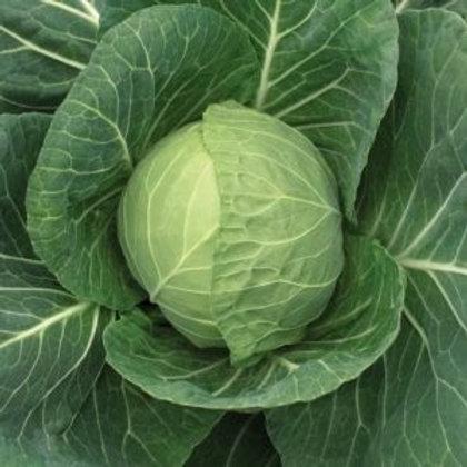 Cabbage, Green Storage