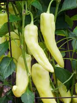 Goddess Banana Pepper
