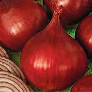 Onion, Redwing