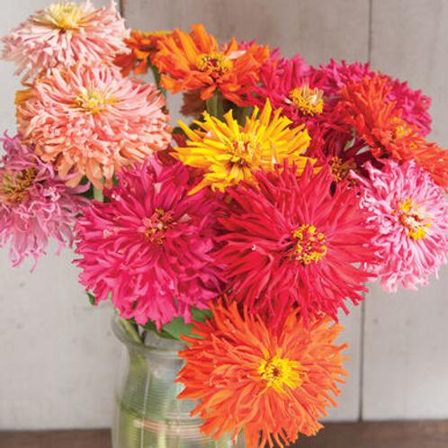 Zinnia, Cactus Flower Mix