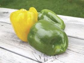 Sweet Sunrise Yellow Bell Pepper
