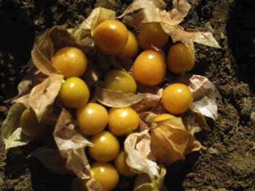 Ground Cherry, Aunt Molly's