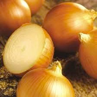 Onion, Patterson