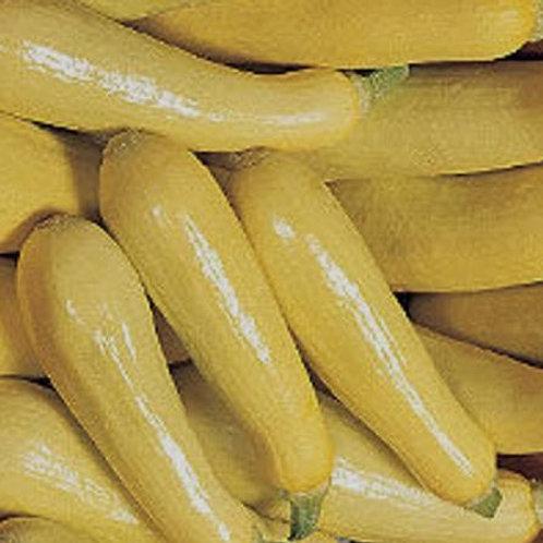Summer Squash, Saffron Yellow