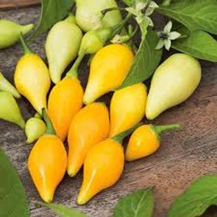 Biquhino Yellow Pepper