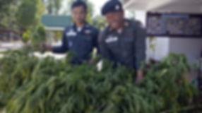 Kabinett gibt grünes Licht für medizinische Anwendung von Cannabis, Opium und Kratom