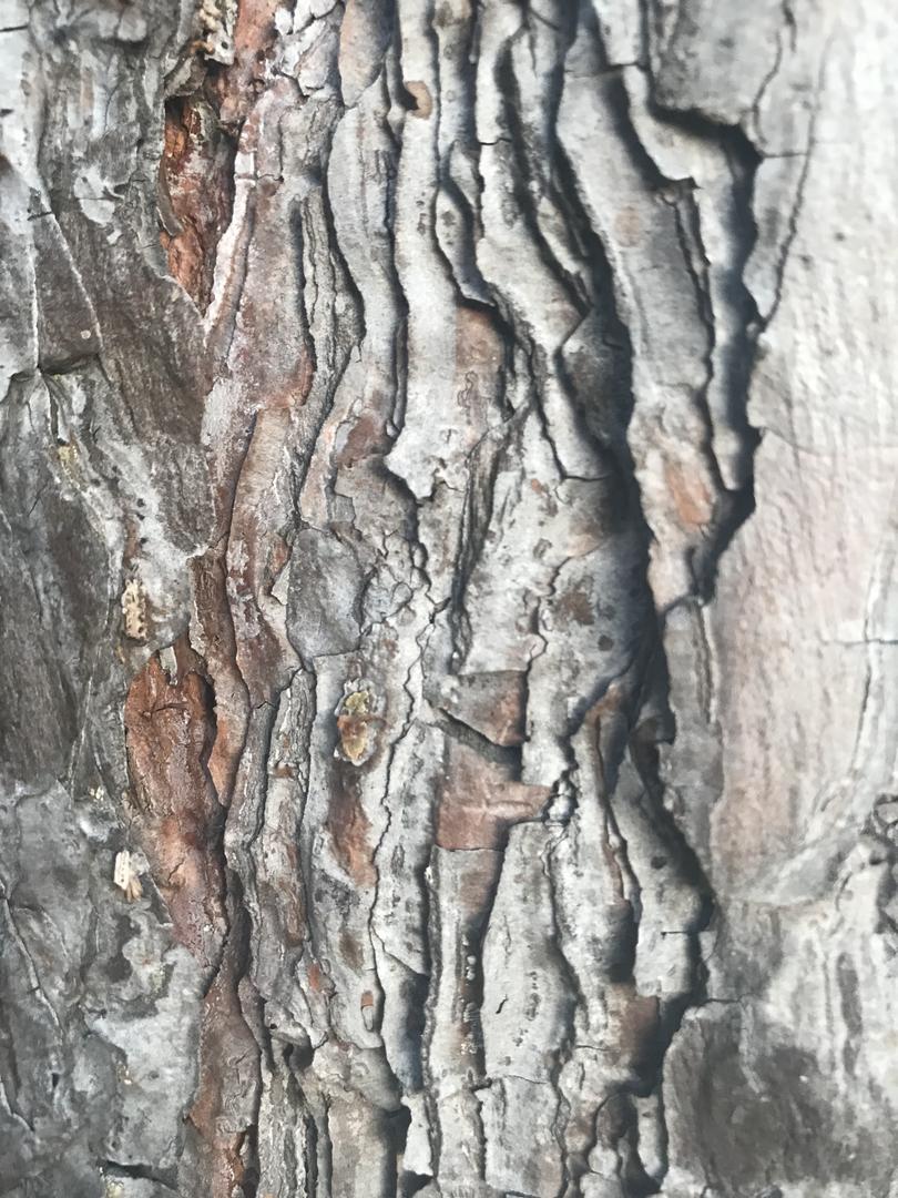 texture photograph 7