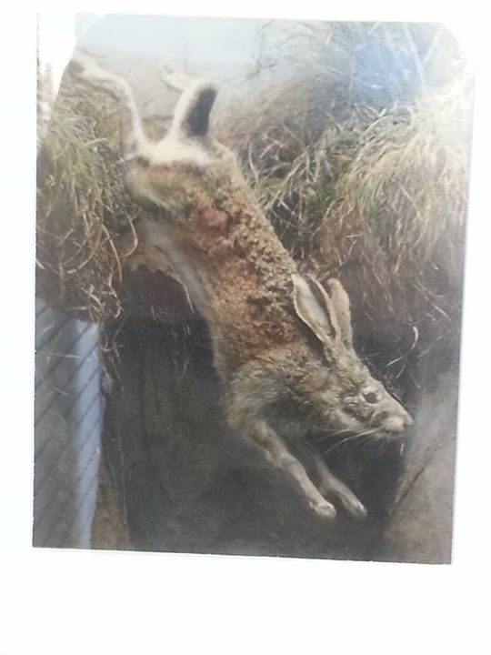 """Rabbit""  Tyler Quintin"