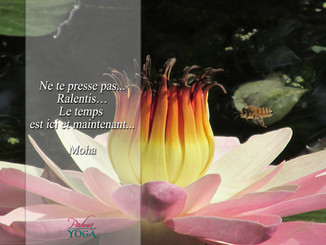 PADMA YOGA - LOCANA 6 .jpg