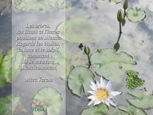 PADMA YOGA - LOCANA 10 .jpg