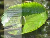 PADMA YOGA - LOCANA 7.jpg
