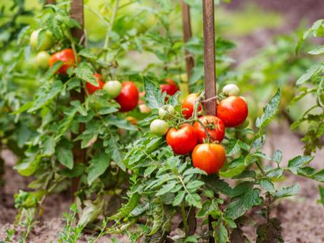 FEED: Farming, Employment, Education, Distribution