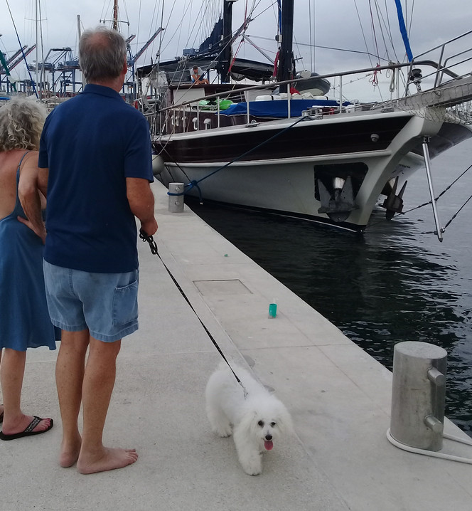 Sail Yacht Jubilee and friendly woof!.jp
