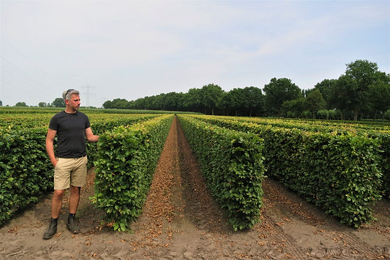 George Cullis from Studio Culli in a Dutch tree nursery standing against pre-formed hedges