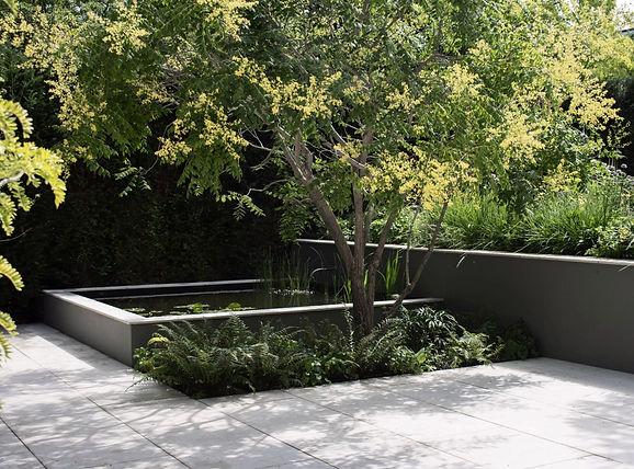 Studio cullis pool with flowering tree studio cullis garden design george cullis