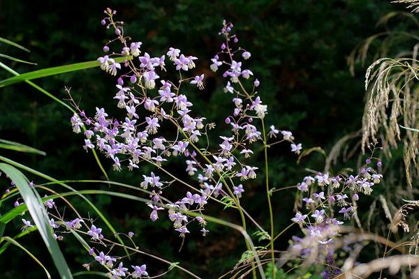 flowering long planting border muswell hill garden