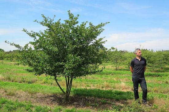 George Cullis from Studio Cullis standing next to a Crab Apple tree in a Dutch tree nursery